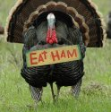 eat-ham-turkey.jpg